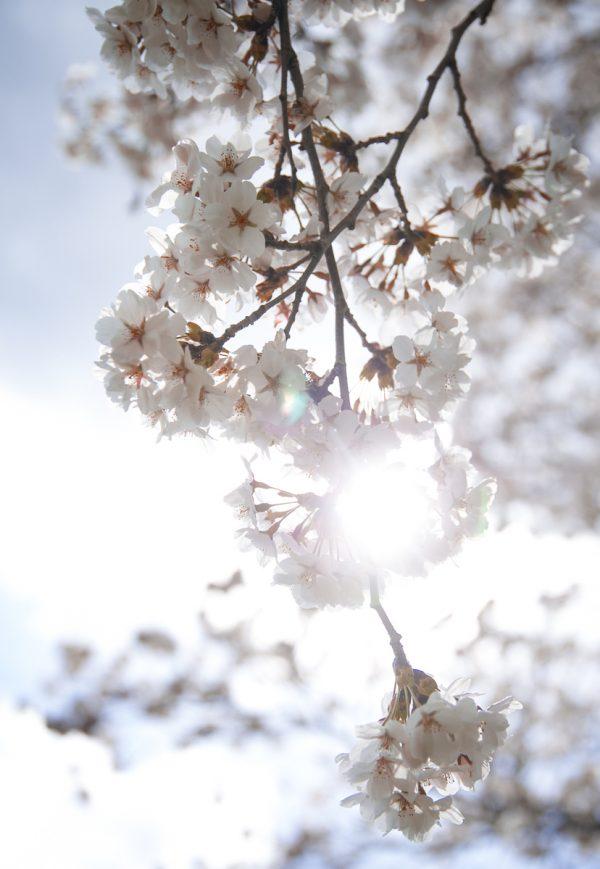 春サムネイル